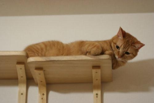 ペットと暮らす家 ハウスメーカー 注文住宅 ランキング